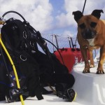 After dive on Huahine Iti diving verathesailor dogonboard adventure sailingbaydreamerhellip