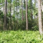 Almoast like back home Pinne Woods and ferns tallar ochhellip