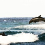 We are now back in amazing Rangiroa  dolphins Tuamotushellip