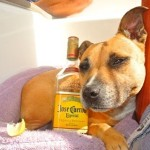 Just another week in quarantine verathesailor dogonboard dog staffe tequilahellip